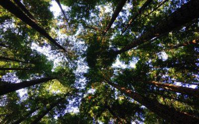 Jak zadbać o środowisko naturalne?